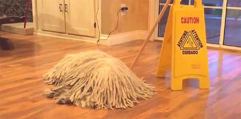 La propreté #2 : début cacastrophique !